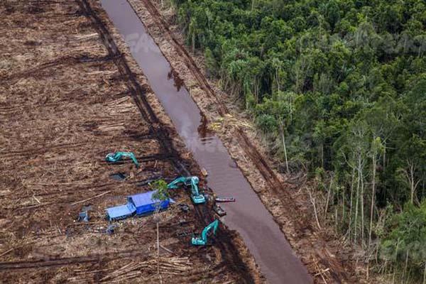 Eksavator yang baru saja menebangi pohon-pohon di hutan gambut  PT. Riau Andalan Pulp & Paper (PT RAPP), di  Pulau Padang, Bengkalis, Riau.  RAPP, adalah anak usaha APRIL. © Ulet Ifansasti / Greenpeace