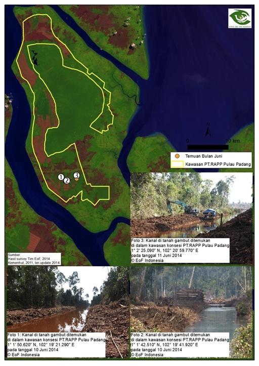 Konsesi RAPP di Pulau Padang. Foto : Eyes on the Forest