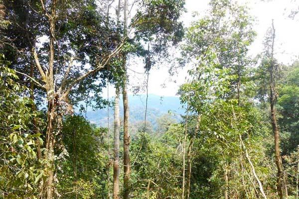 Hutan adat Long Isun yang terancam habis. Foto: Tekla Tirah Liah