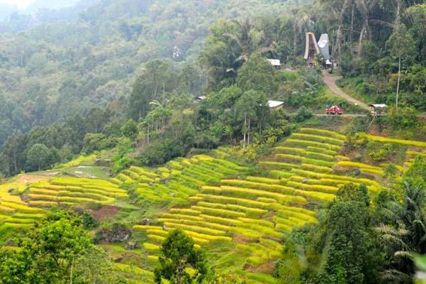 Undakan-undakan lahan pertanian warga dengan rumah adat di bagian atas dan di kelilingi hutan. Foto: Eko Rusdianto