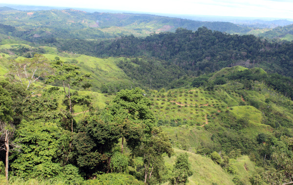 Kawasan DAS Peusangan di perbatasan Bener Meriah dan Bireuen yang sudah hilang hutannya karena sawit. Foto: Chik Rini