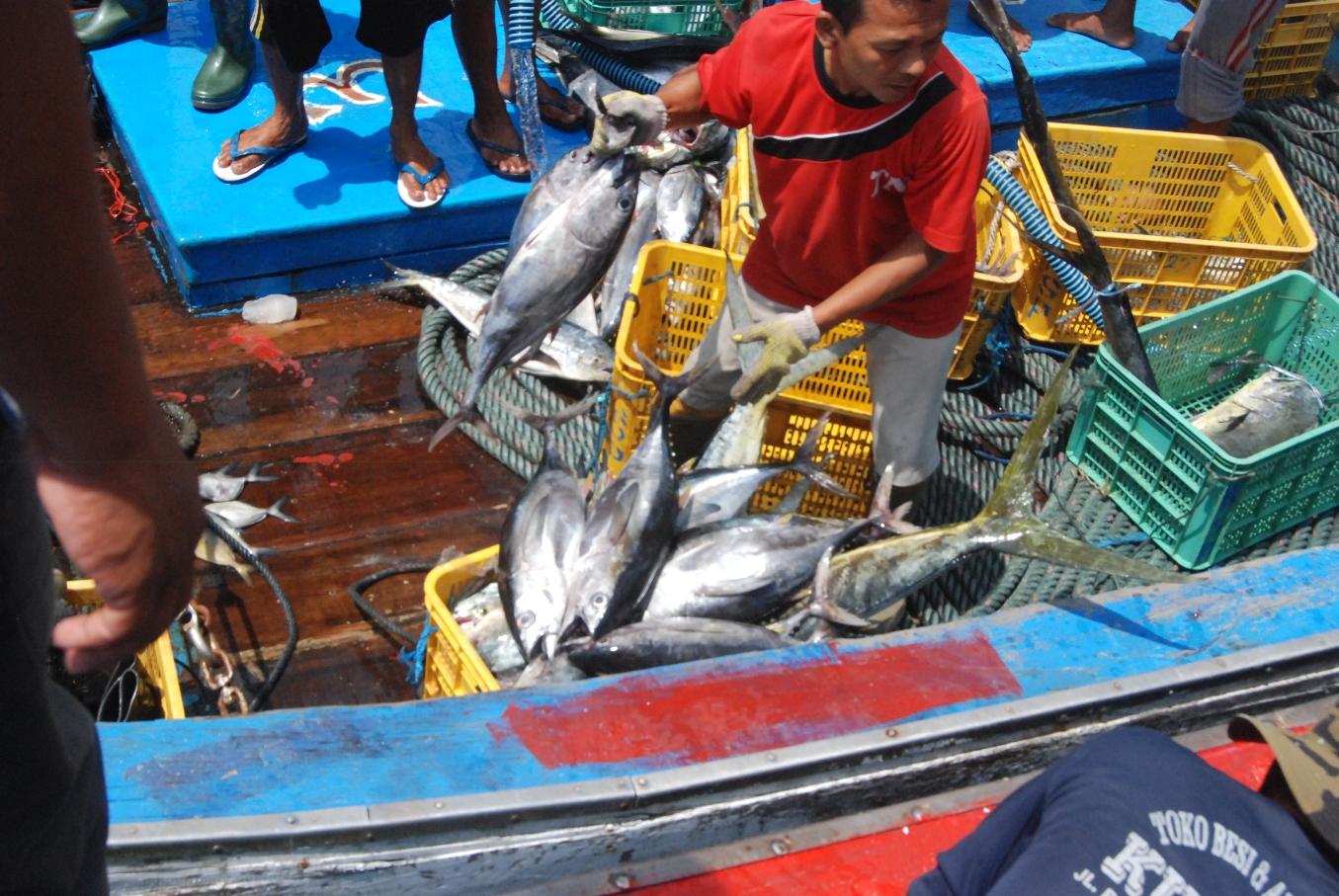 Nelayan melakukan bongkar muat ikan hasil tangkapan, termasuk ikan tuna di Pelabuhan Perikanan Sadeng, Gunung Kidul, Yogyakarta pada akhir November 2015. Foto : Jay Fajar