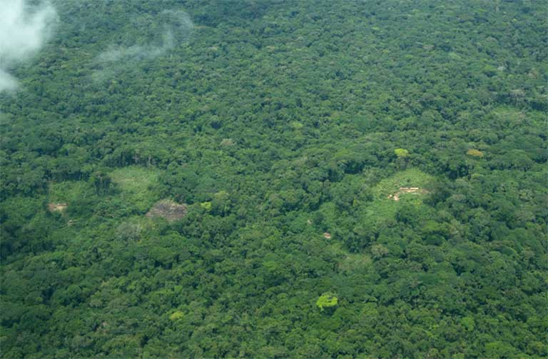 Even Minor Forest Disturbance Can Cause Great Ape Population Crashes