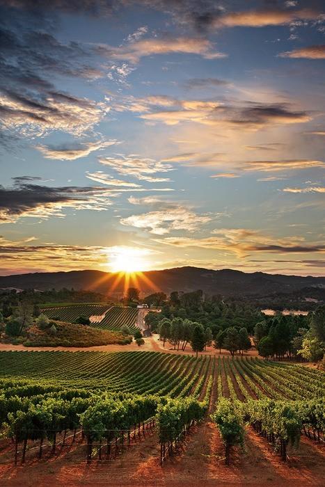 Sunset Vineyard, California