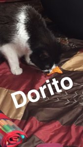 Also taken by my client. Jade loved Doritos