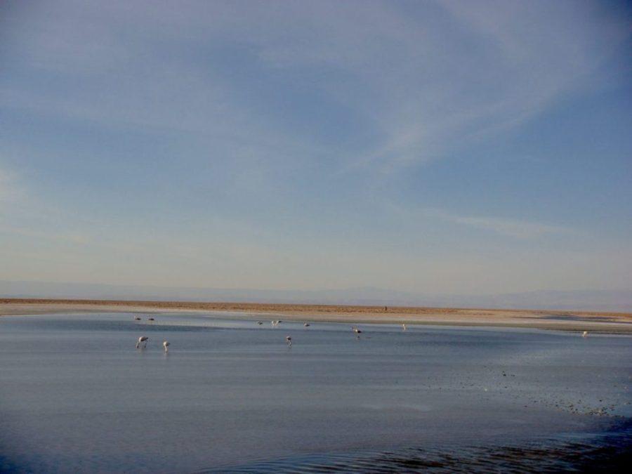 Lagoas Altiplanicas, Deserto do Atacama