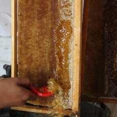"""GAZA, PALESTINA. """"Simplemente, sé feliz"""". Palestino recolectando miel en su panal."""