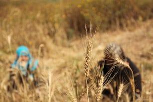 20160518_Israel-damages-gaza-crops-agriculture-5