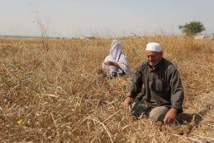 20160518_Israel-damages-gaza-crops-agriculture-6