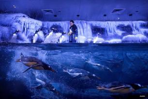ESTAMBUL, TURQUÍA- Sólo sonríe y saluda. Pingüinos disfrutando de un baño en el acuario de Estambul