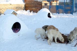 ARDAHÁN, TURQUÍA- Los perros beben agua en los charcos de la nieve