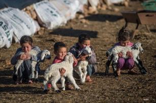 SANLIURFA, TURQUÍA- Los nómadas comienzan su viaje a lugares más cálidos para pasar los meses de invierno