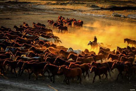 KAYSERI, TURQUÍA- Un pastor conduce una manada de caballos durante la puesta de sol en las faldas de la montaña de Erciyes