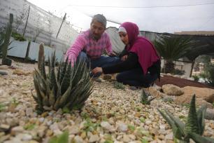 Vivero de cactus en la Franja de Gaza [Mohammed Asad / Middle East Monitor]