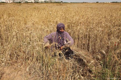 Excavadoras israelíes arrasan una granja palestina en Belén