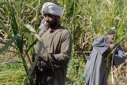 Egipto pierde 53.000 acres de tierra agrícola en 8 años