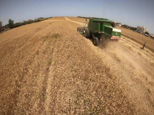 Comienza la cosecComienza la cosecha de cereales en Gaza, el 3 de mayo de 2021 [Mohammed Asad/Middle East Monitor].ha de cereales en Gaza, el 3 de mayo de 2021 [Mohammed Asad/Middle East Monitor].