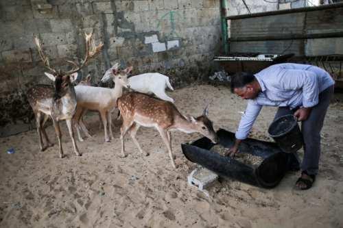 """Gaza advierte de una """"catástrofe"""" por la escasez de alimentos…"""
