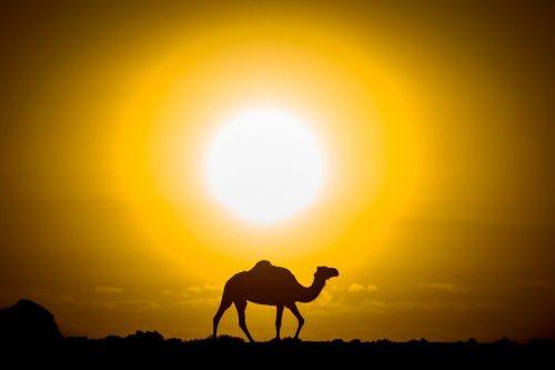 Marruecos registra la temperatura más alta desde 1925