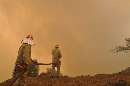 Turquía: los incendios forestales azotan a las abejas y a…