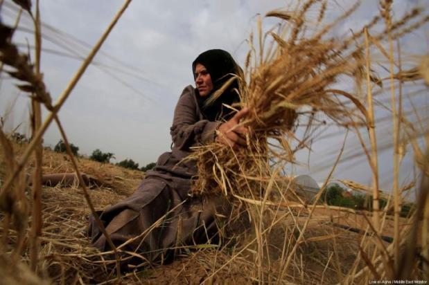 Naziha Qudeh, de 37 anos, ferida durante os protestos da Grande Marcha do Retorno, trabalha nos campos de sua família, na cidade de Khan Younis, no sul de Gaza, junho de 2019 [Loai el-Agha/Monitor do Oriente Médio]