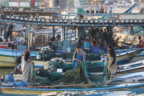 Os pescadores de Gaza obtiveram grandes quantidades de peixes depois de serem impedidos de navegar por 18 dias, devido ao fechamento do mar pela ocupação, 3 de setembro de 2020 [Mohammed Asad / Monitor do Oriente Médio]