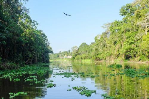 Floresta Amazônica [Flick]