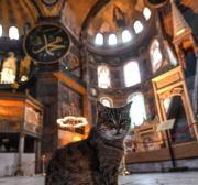 Turquia deporta japonês acusado de matar e comer gatos