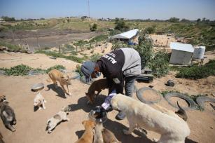 Reabilitando cães abandonados de Gaza, em 13 de outubro de 2021, em Gaza [Mohammed Asad/Monitor do Oriente Médio]