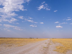 Landschaft im CKGR.
