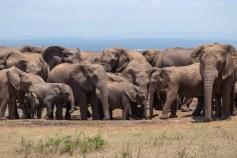 Und wenige Minuten später haben die Elefanten die Warzenschweine fast vertrieben.