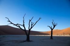 Manche dieser Bäume sind über 500 Jahre alt.