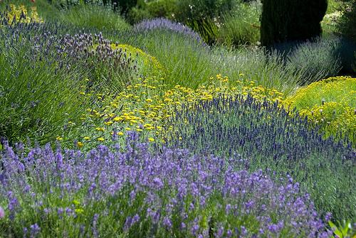 Am nager un jardin m diterran en les r gles monjardin - Creer un jardin mediterraneen ...