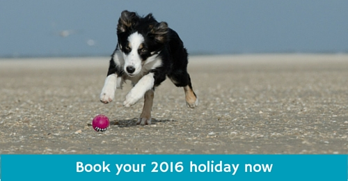 2016 holidays in Cornwall near Newquay