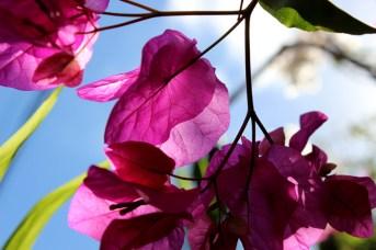 Fotografie Pink Flower