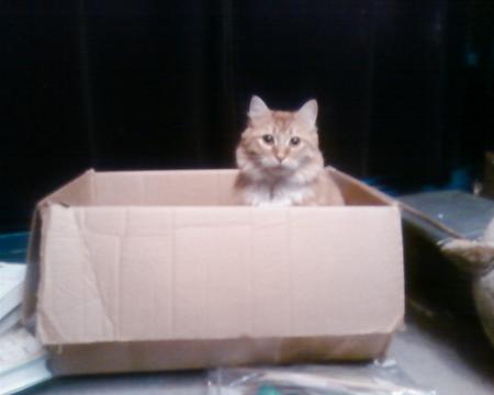 henry-moving-box