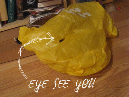 'eye' see you -- cat in a plastic bag