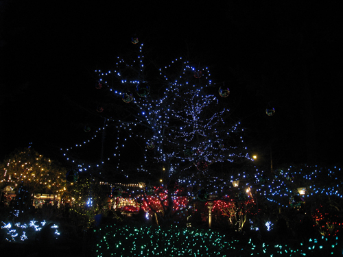 Canyon Lights decorating Capilano Suspension Bridge park