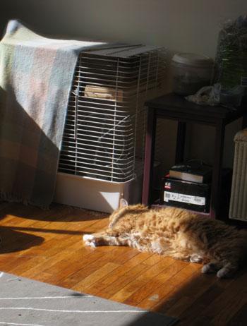 Henry sunbathing beside Chico