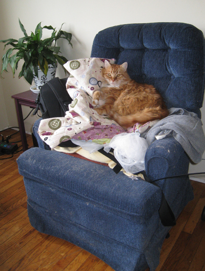 Henry, on his chair, on a pile of crap