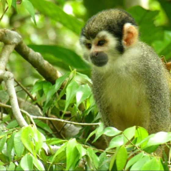 Excursion, Forêt de Pacoche, Lodge Mono 500, Equateur