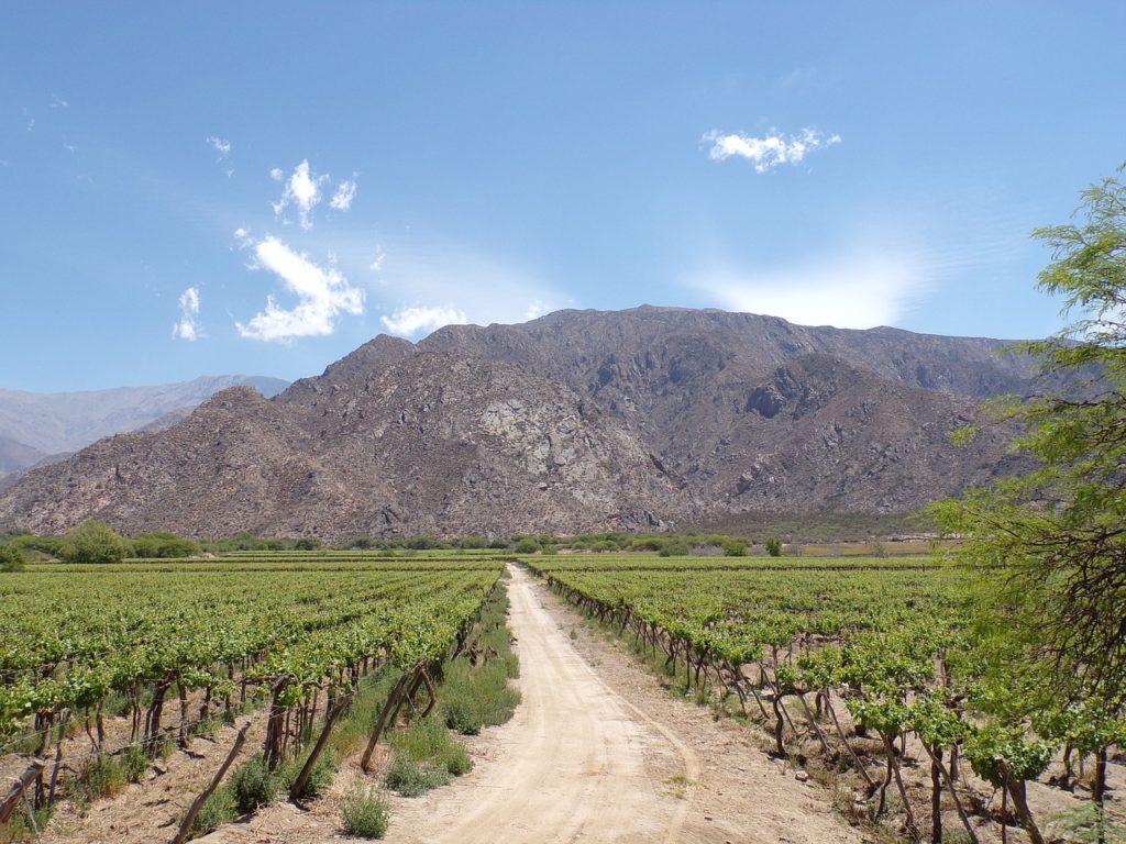 route des vins argentine