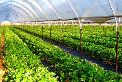 9-greenhouse