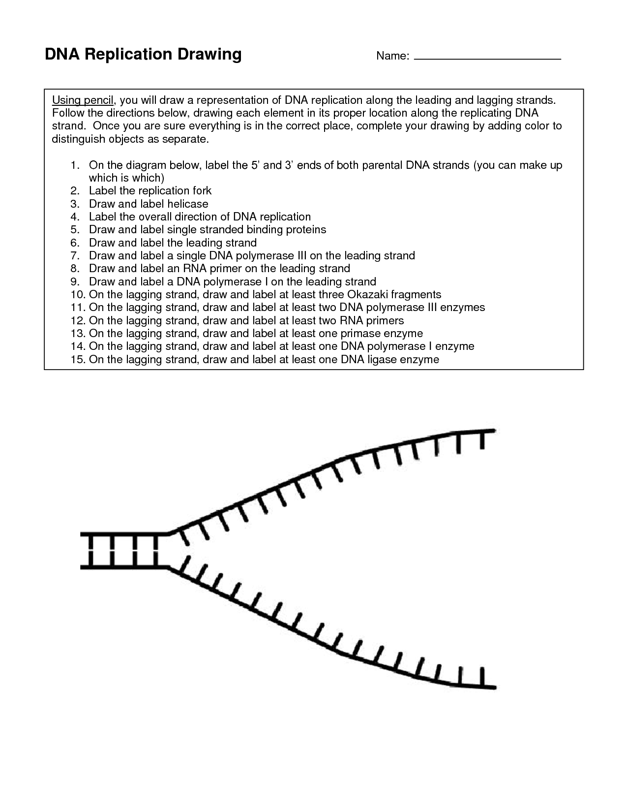 Dna Strand Replication Worksheet