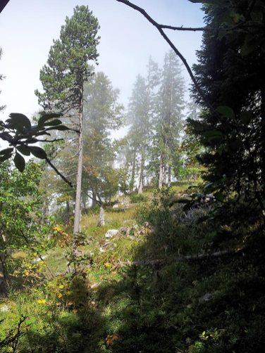 Montagne du Charbon dans le bois