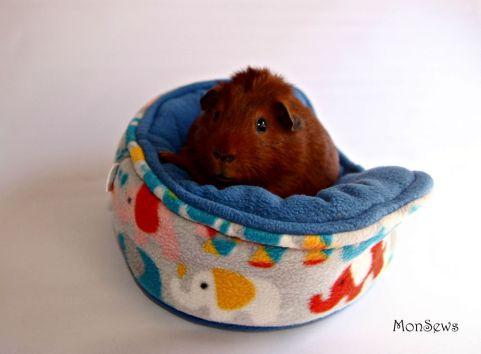 Ace-guinea-pig