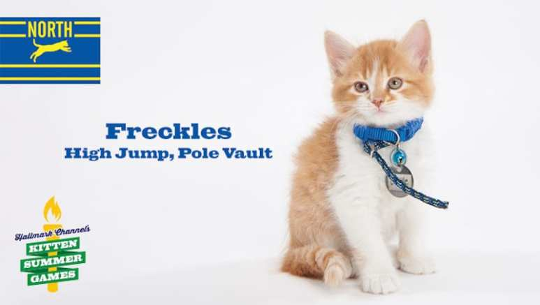 Freckles is taking part in the Kitten Summer Games, representing the North in High Jump and Pole Vault