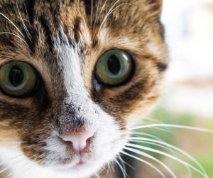 top 10 reasons to adopt a cat