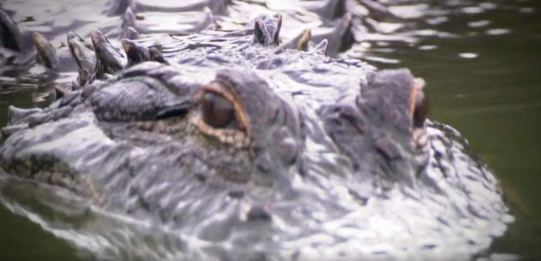 Crocodiles are everywhere and these salties can be deadly