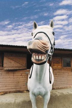 A horse smiling